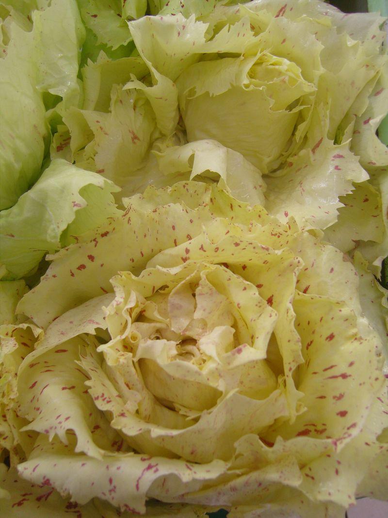 Salade CastelFranco