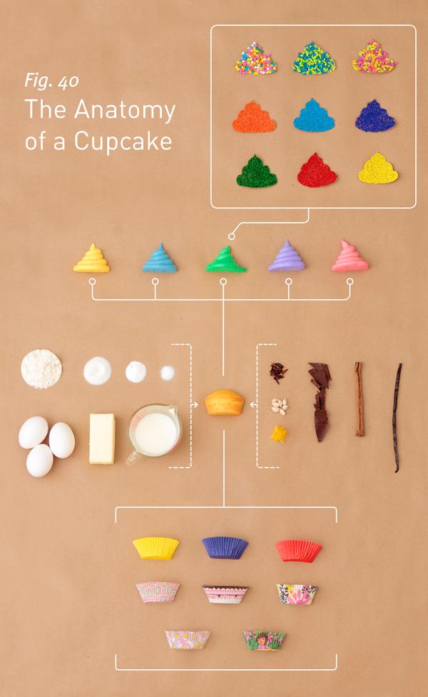 CupcakeAnatomy_v03