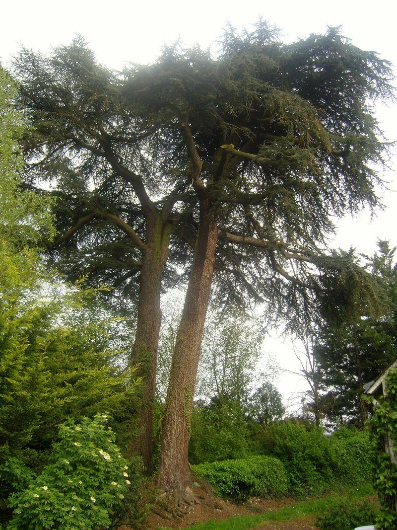 La Roche le Roy Arbres centenaire du Jardin