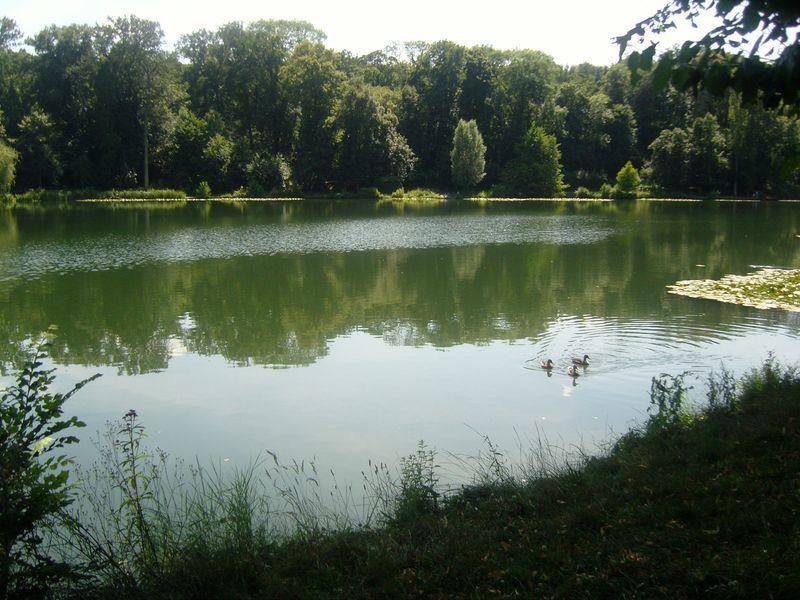 Les étangs de Corot  premier étang avec canard